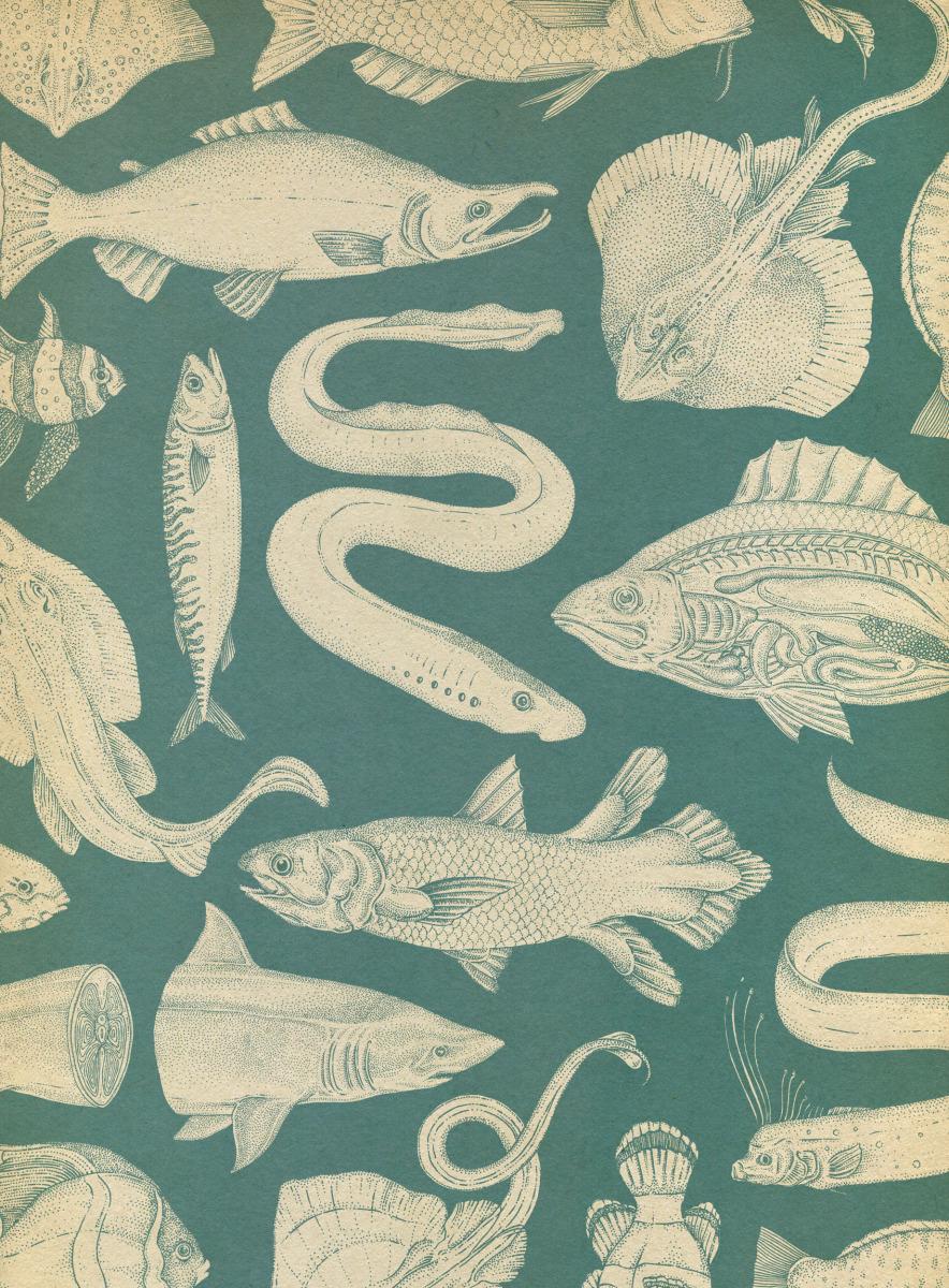 """Katie Scott / Books / Animalium<span class=""""slide_numbers""""><span class=""""slide_number"""">24</span>/34</span>"""