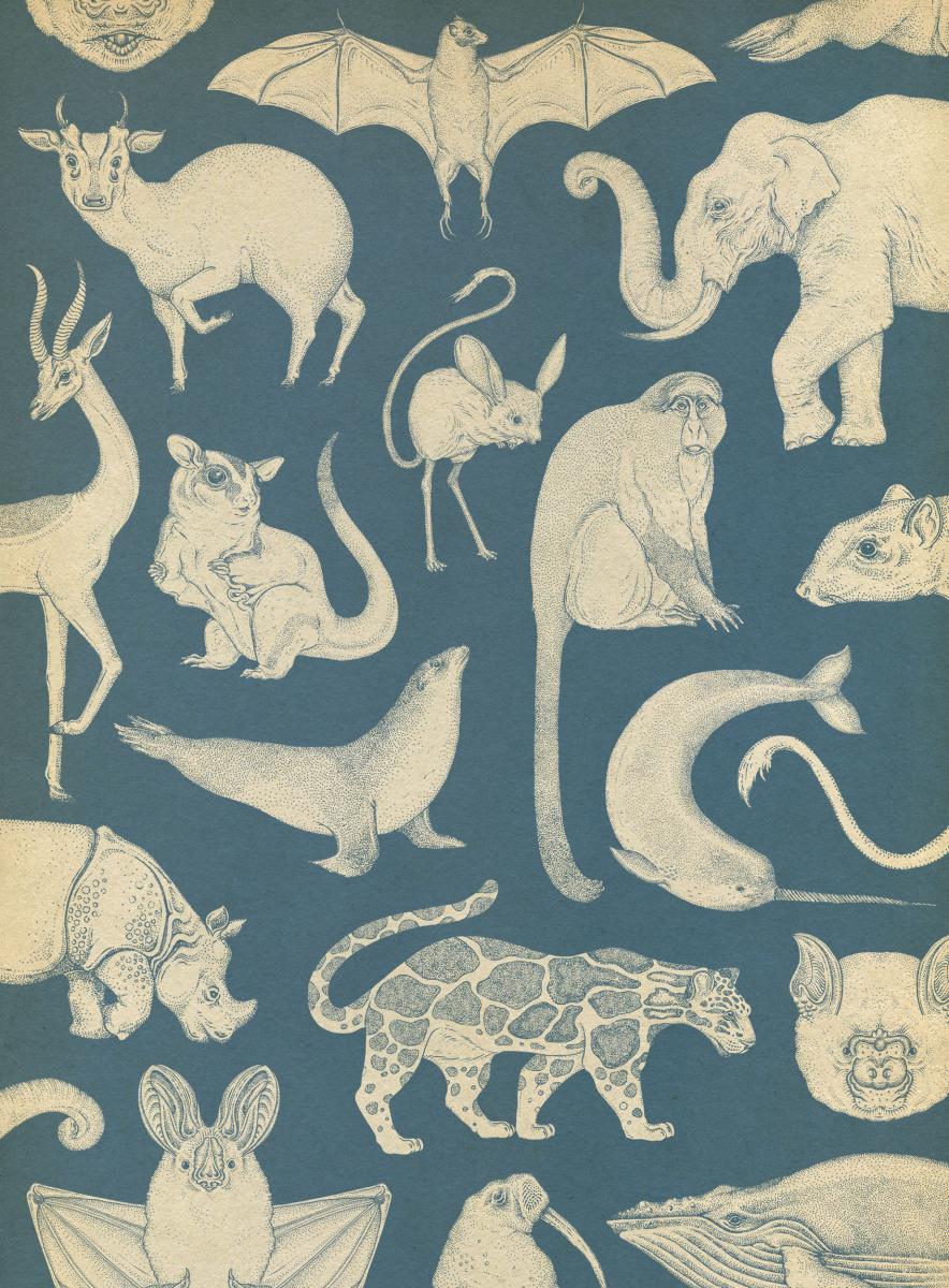"""Katie Scott / Books / Animalium<span class=""""slide_numbers""""><span class=""""slide_number"""">23</span>/34</span>"""