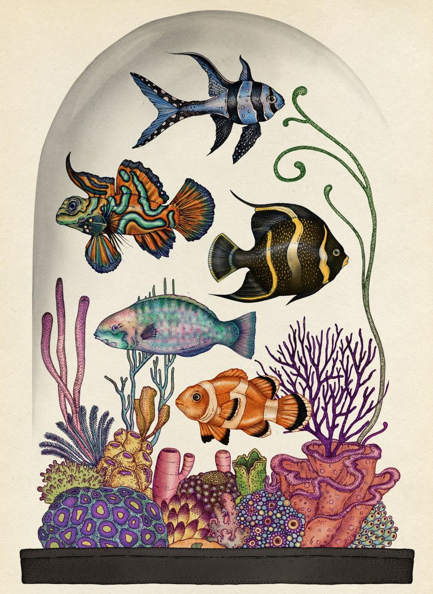 """Katie Scott / Books / Animalium<span class=""""slide_numbers""""><span class=""""slide_number"""">22</span>/34</span>"""