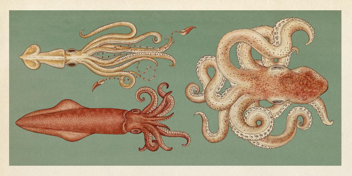 """Katie Scott / Books / Animalium<span class=""""slide_numbers""""><span class=""""slide_number"""">21</span>/34</span>"""