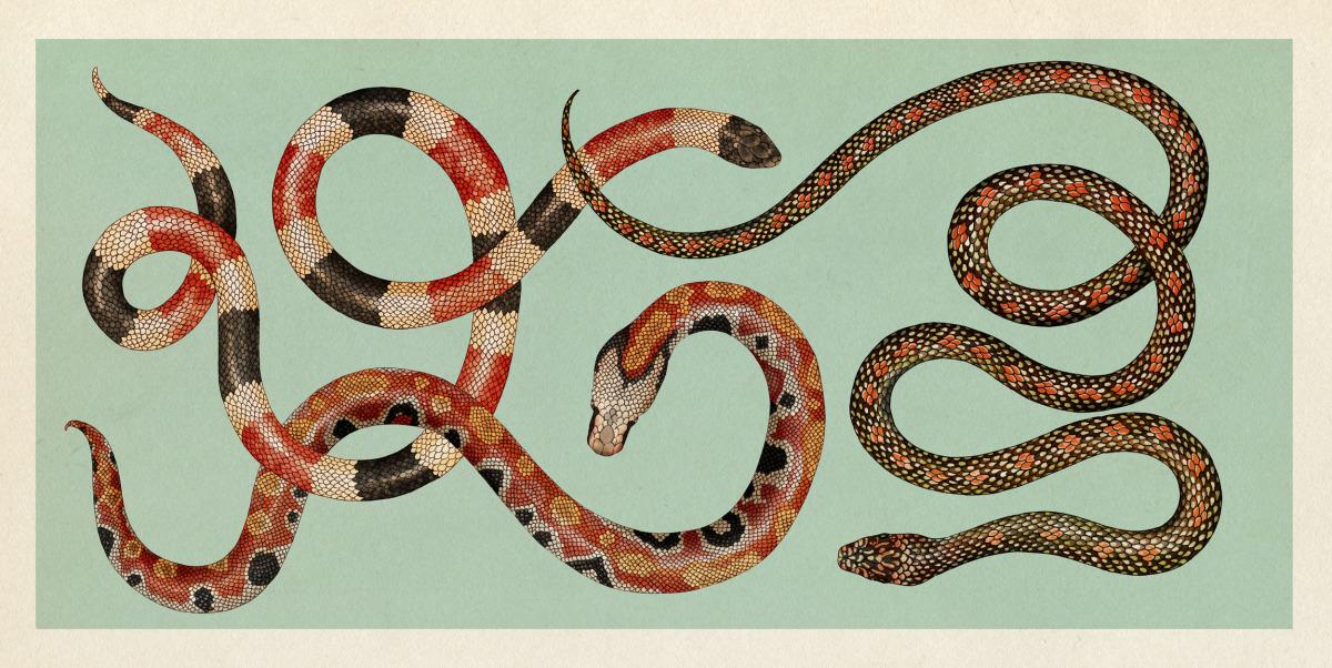 """Katie Scott / Books / Animalium<span class=""""slide_numbers""""><span class=""""slide_number"""">18</span>/34</span>"""