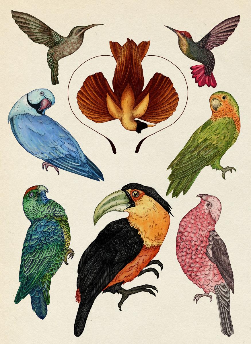 """Katie Scott / Books / Animalium<span class=""""slide_numbers""""><span class=""""slide_number"""">32</span>/34</span>"""