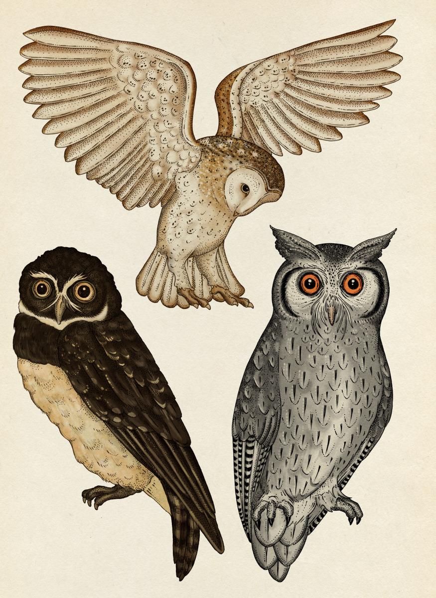"""Katie Scott / Books / Animalium<span class=""""slide_numbers""""><span class=""""slide_number"""">31</span>/34</span>"""