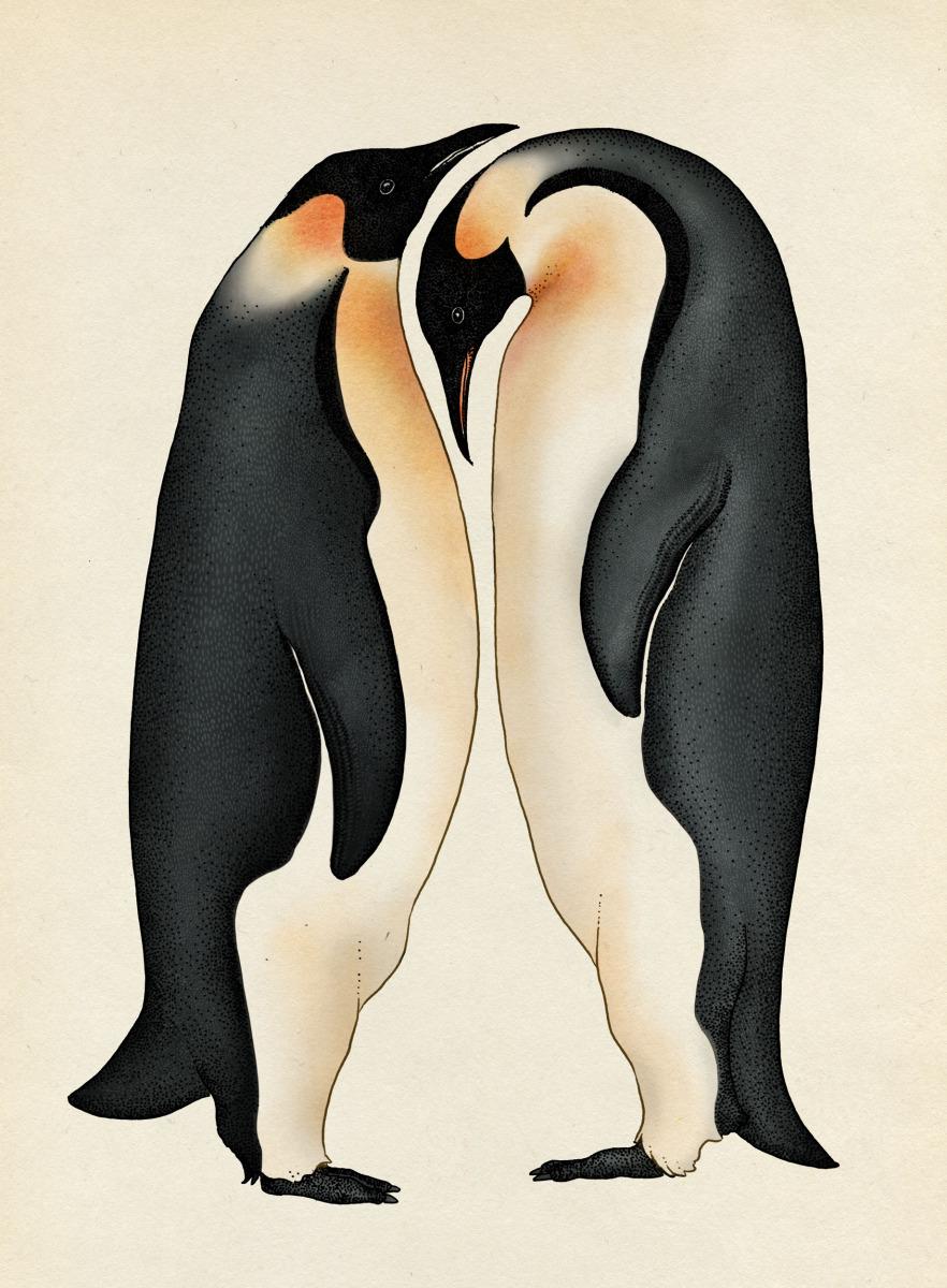 """Katie Scott / Books / Animalium<span class=""""slide_numbers""""><span class=""""slide_number"""">29</span>/34</span>"""