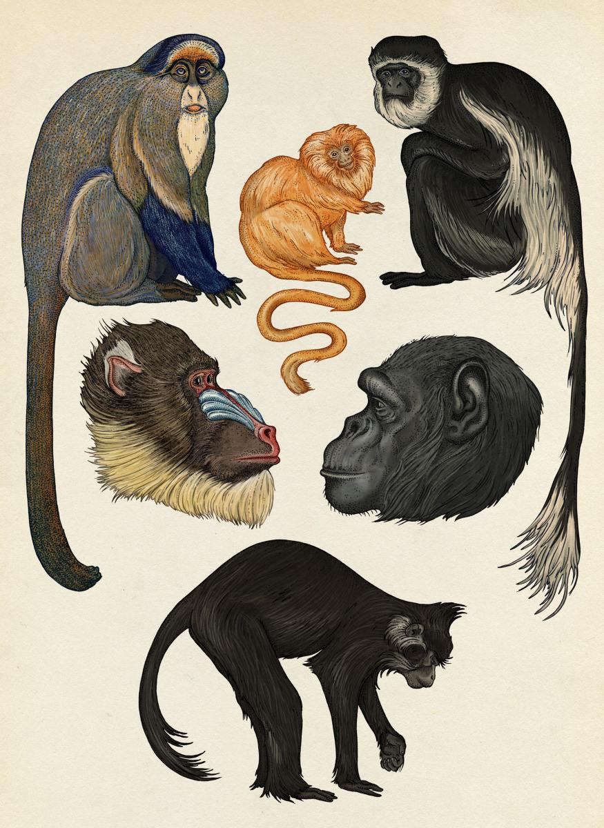 """Katie Scott / Books / Animalium<span class=""""slide_numbers""""><span class=""""slide_number"""">27</span>/34</span>"""