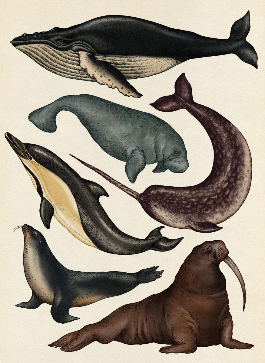 """Katie Scott / Books / Animalium<span class=""""slide_numbers""""><span class=""""slide_number"""">26</span>/34</span>"""