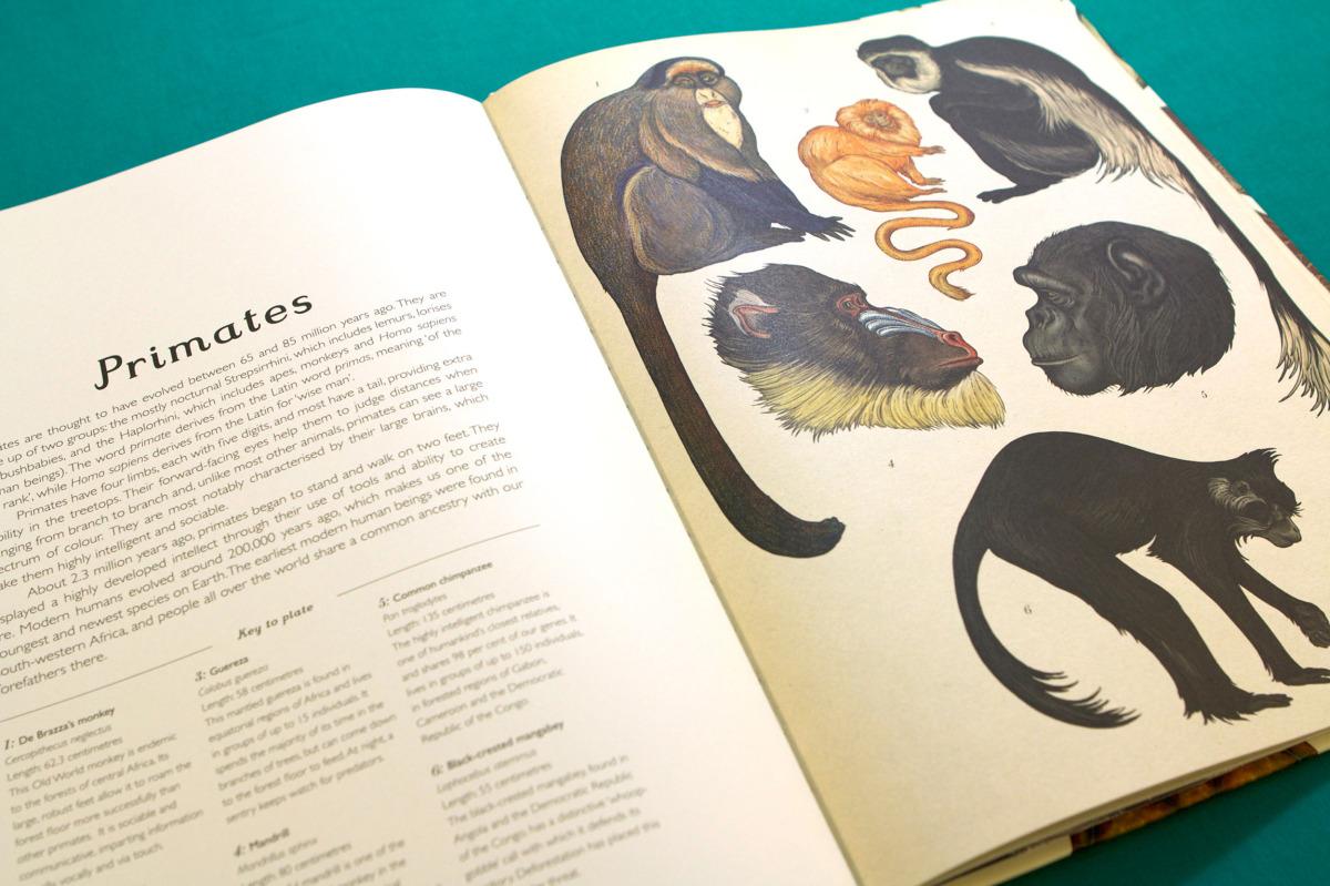 """Katie Scott / Books / Animalium<span class=""""slide_numbers""""><span class=""""slide_number"""">6</span>/34</span>"""