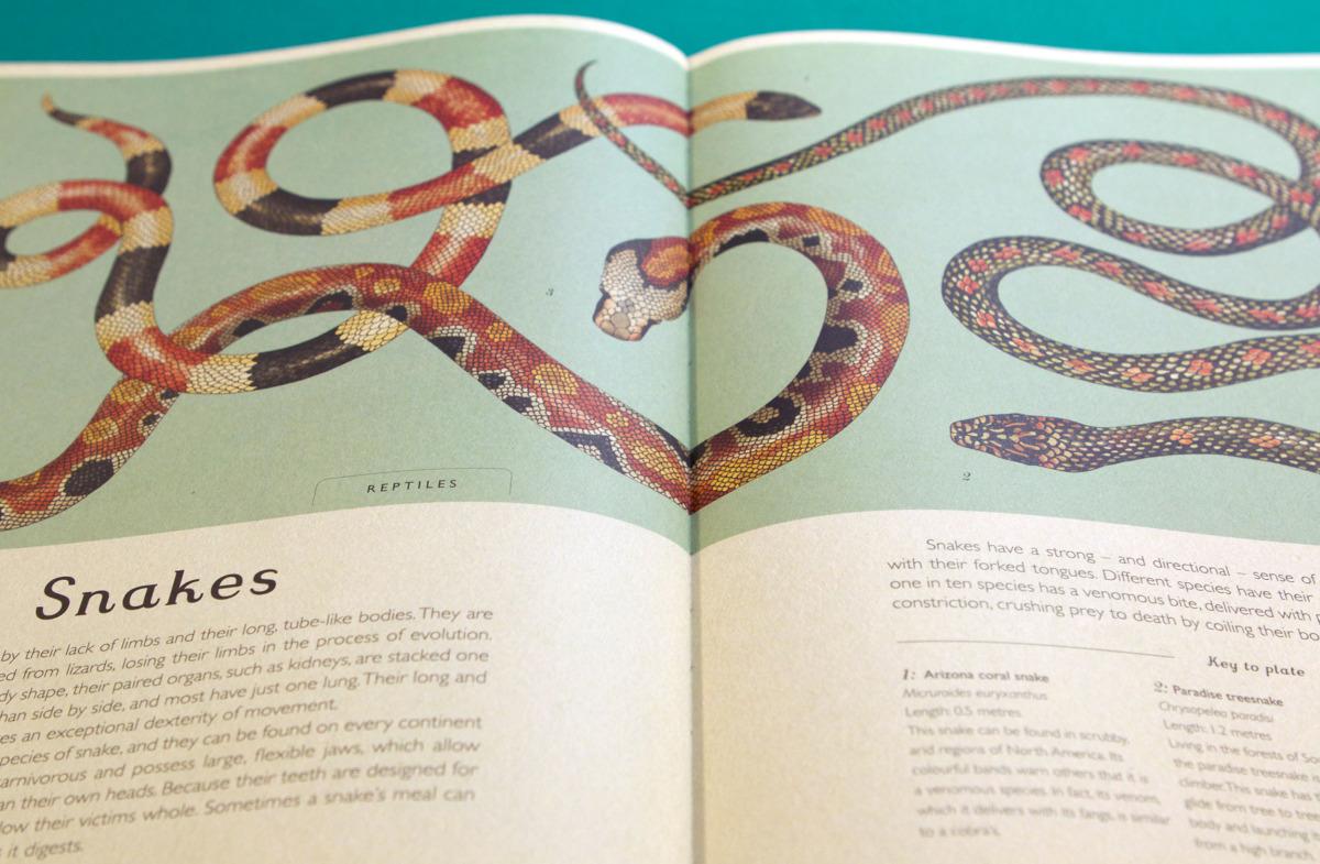 """Katie Scott / Books / Animalium<span class=""""slide_numbers""""><span class=""""slide_number"""">5</span>/34</span>"""