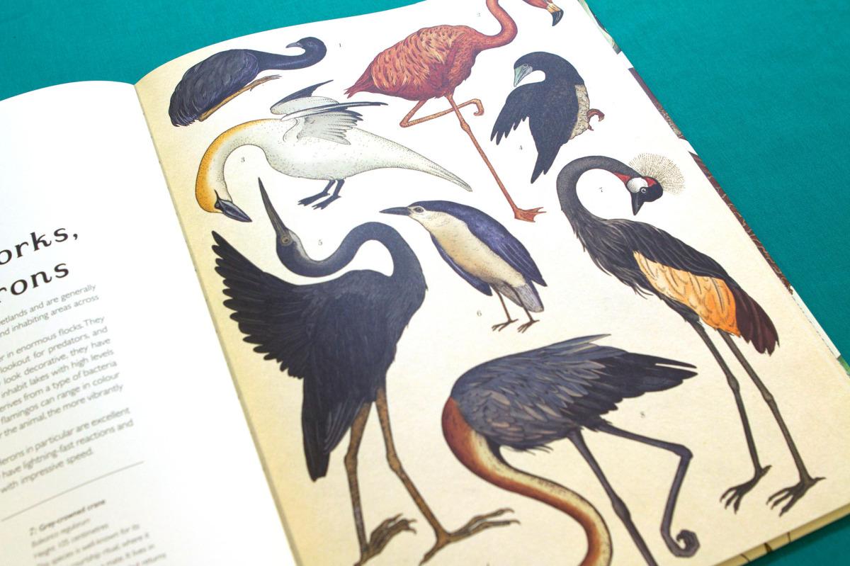 """Katie Scott / Books / Animalium<span class=""""slide_numbers""""><span class=""""slide_number"""">4</span>/34</span>"""