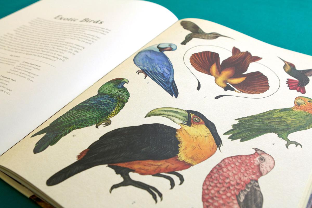 """Katie Scott / Books / Animalium<span class=""""slide_numbers""""><span class=""""slide_number"""">14</span>/34</span>"""