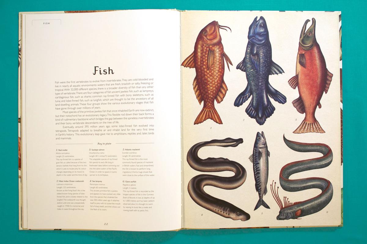 """Katie Scott / Books / Animalium<span class=""""slide_numbers""""><span class=""""slide_number"""">13</span>/34</span>"""