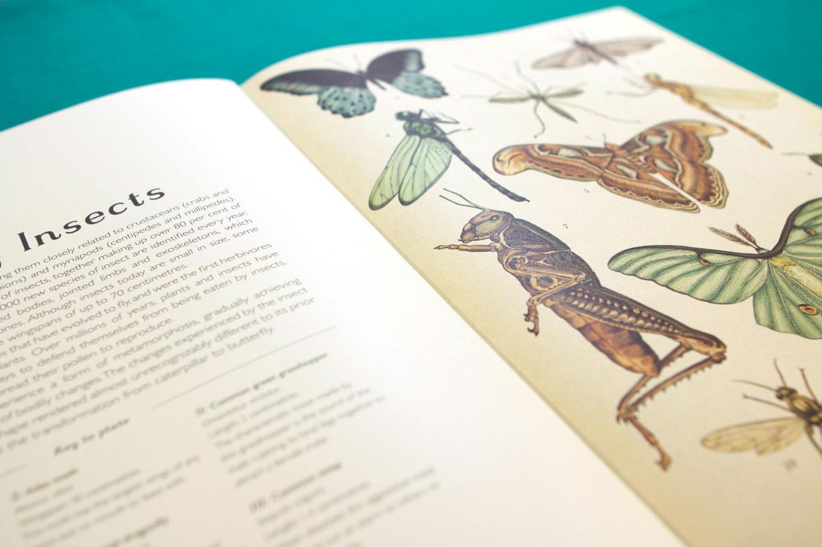 """Katie Scott / Books / Animalium<span class=""""slide_numbers""""><span class=""""slide_number"""">12</span>/34</span>"""
