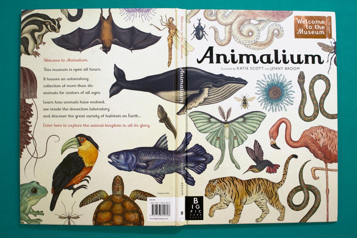 """Katie Scott / Books / Animalium<span class=""""slide_numbers""""><span class=""""slide_number"""">11</span>/34</span>"""
