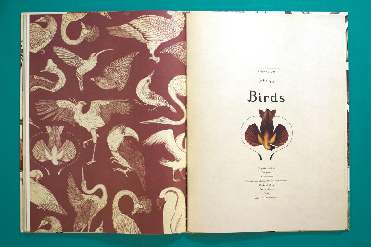 """Katie Scott / Books / Animalium<span class=""""slide_numbers""""><span class=""""slide_number"""">10</span>/34</span>"""
