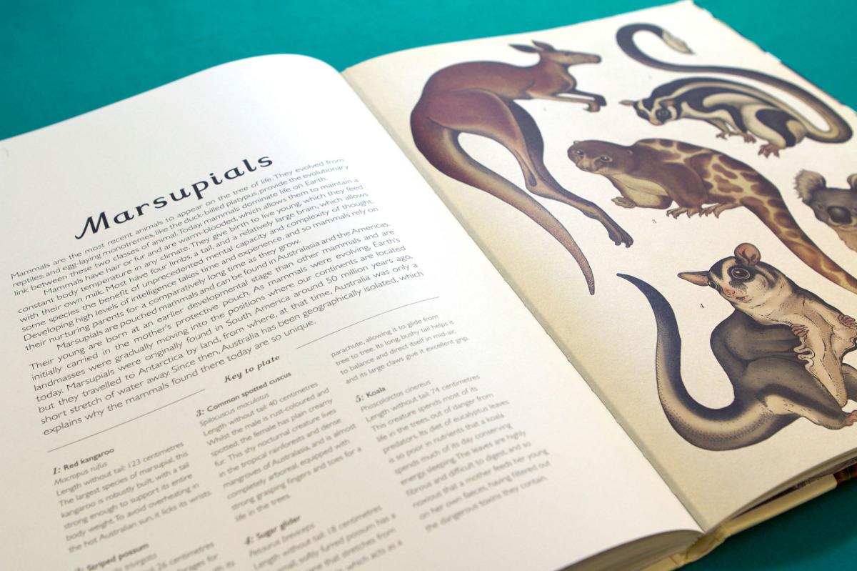 """Katie Scott / Books / Animalium<span class=""""slide_numbers""""><span class=""""slide_number"""">9</span>/34</span>"""