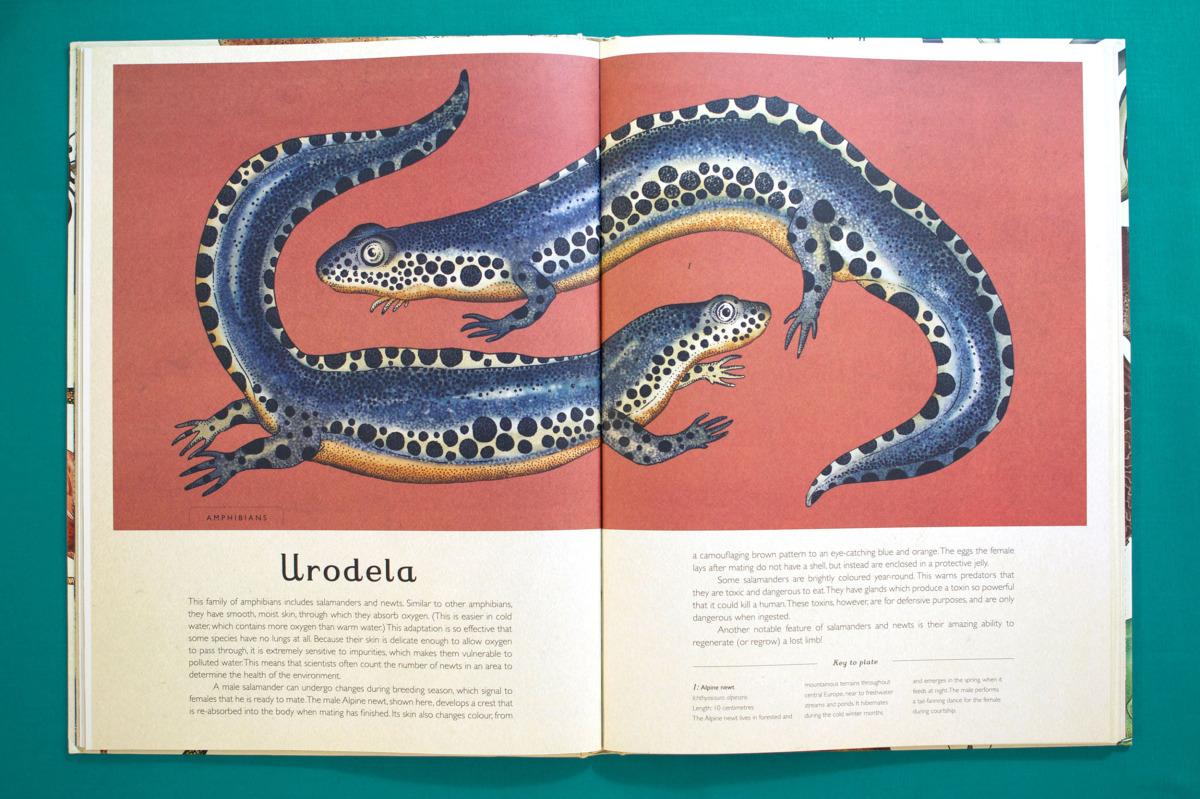 """Katie Scott / Books / Animalium<span class=""""slide_numbers""""><span class=""""slide_number"""">8</span>/34</span>"""
