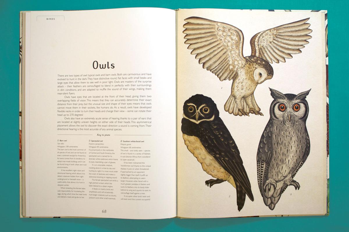 """Katie Scott / Books / Animalium<span class=""""slide_numbers""""><span class=""""slide_number"""">7</span>/34</span>"""
