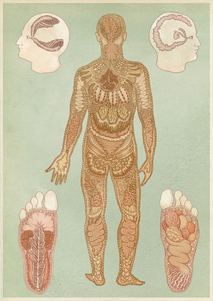 "Katie Scott / Personal Work / Anatomical<span class=""slide_numbers""><span class=""slide_number"">2</span>/5</span>"