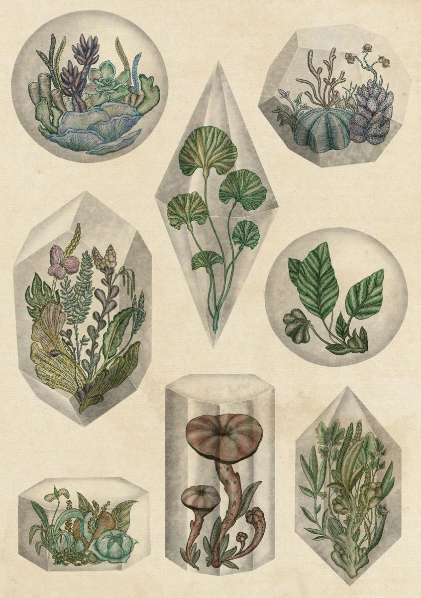 "Katie Scott / Personal Work / Plants<span class=""slide_numbers""><span class=""slide_number"">4</span>/5</span>"