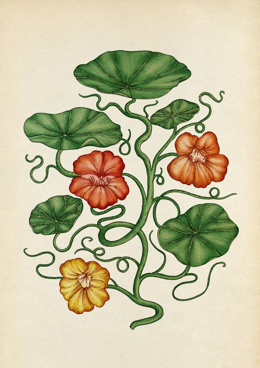 "Katie Scott / Personal Work / Plants<span class=""slide_numbers""><span class=""slide_number"">1</span>/5</span>"