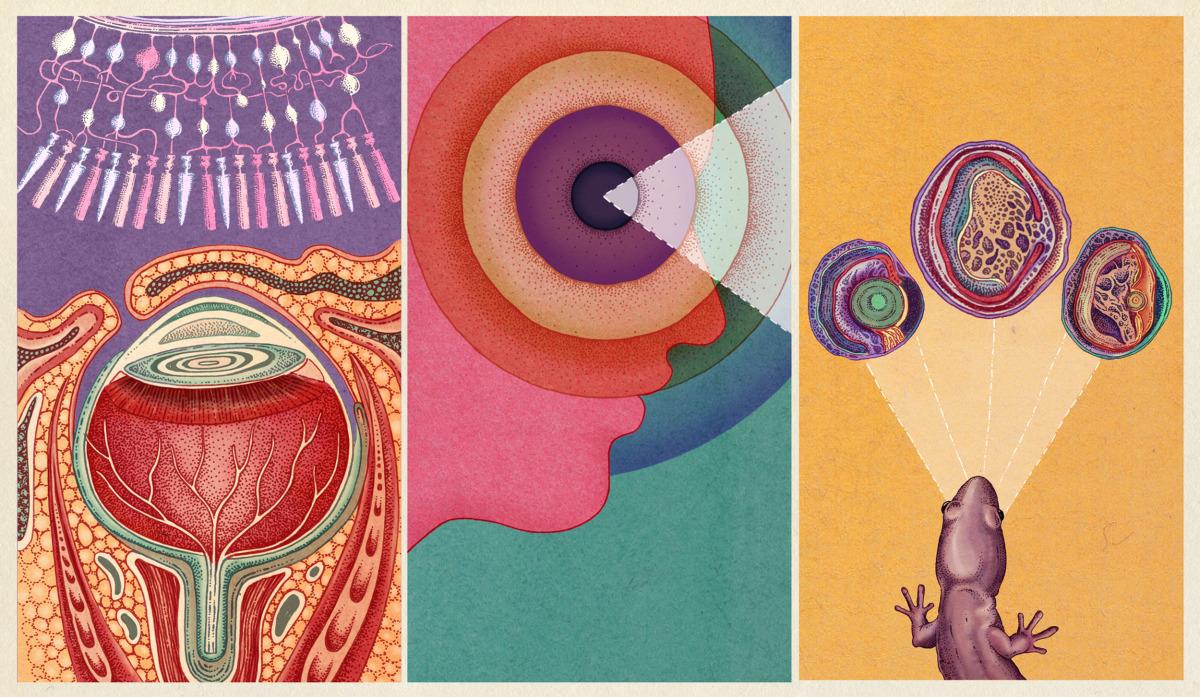 "Katie Scott / Commercial Work / Nautilus<span class=""slide_numbers""><span class=""slide_number"">1</span>/1</span>"