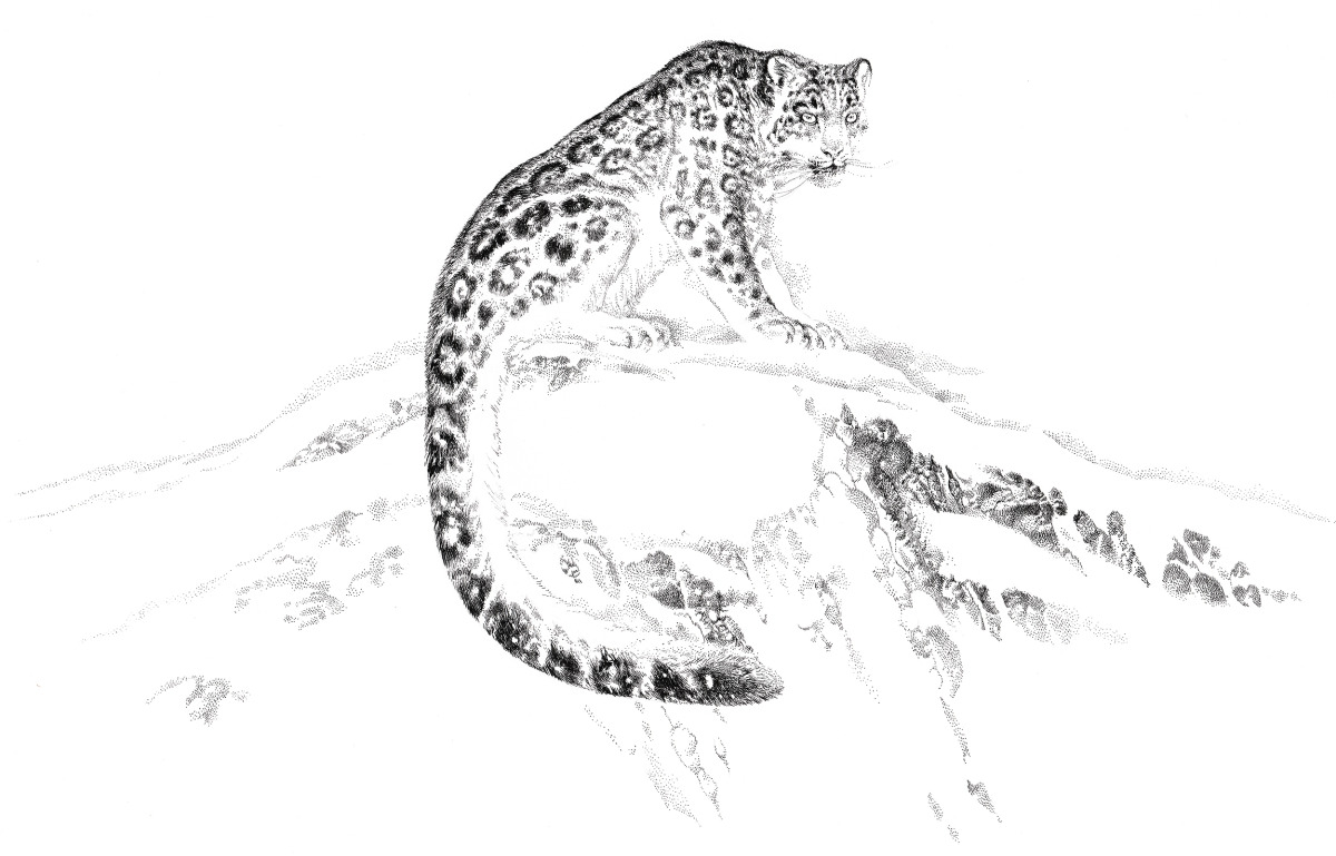 "Vania Zouravliov / Commercial Work / Snow Leopard Vodka<span class=""slide_numbers""><span class=""slide_number"">3</span>/3</span>"