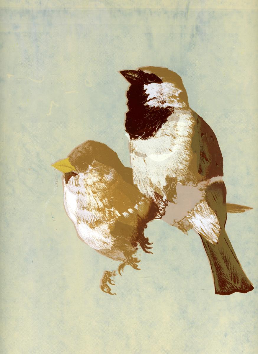 "Kate Gibb / Personal Work / Birds<span class=""slide_numbers""><span class=""slide_number"">1</span>/4</span>"