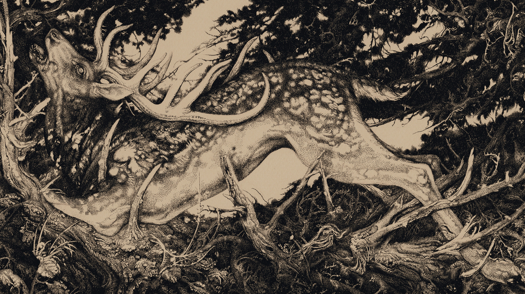 Vania Zouravliov<br /><strong>Moist Stag</strong>