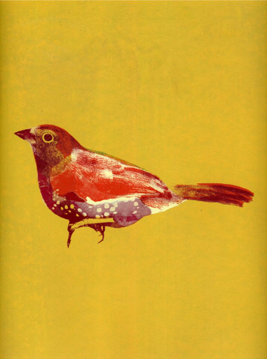 "Kate Gibb / Personal Work / Birds<span class=""slide_numbers""><span class=""slide_number"">3</span>/4</span>"