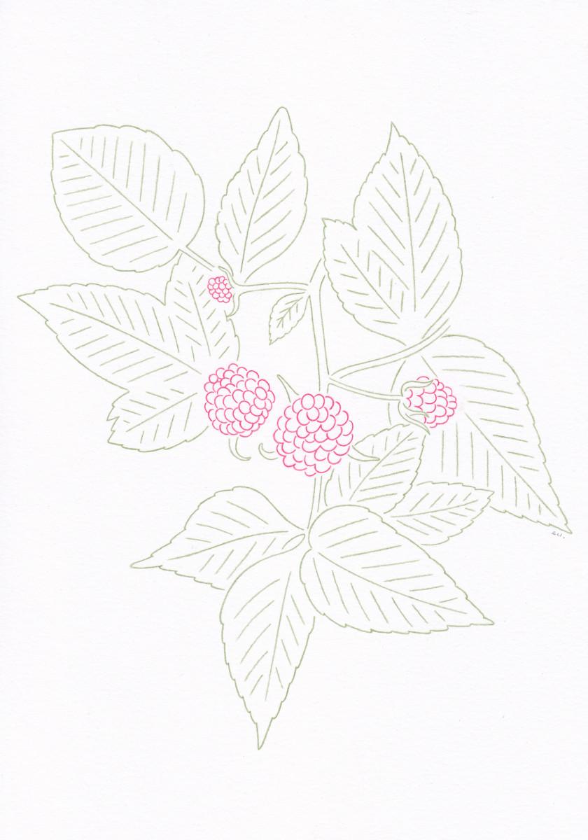"Emi Ueoka / Personal Work / Botanical<span class=""slide_numbers""><span class=""slide_number"">3</span>/5</span>"
