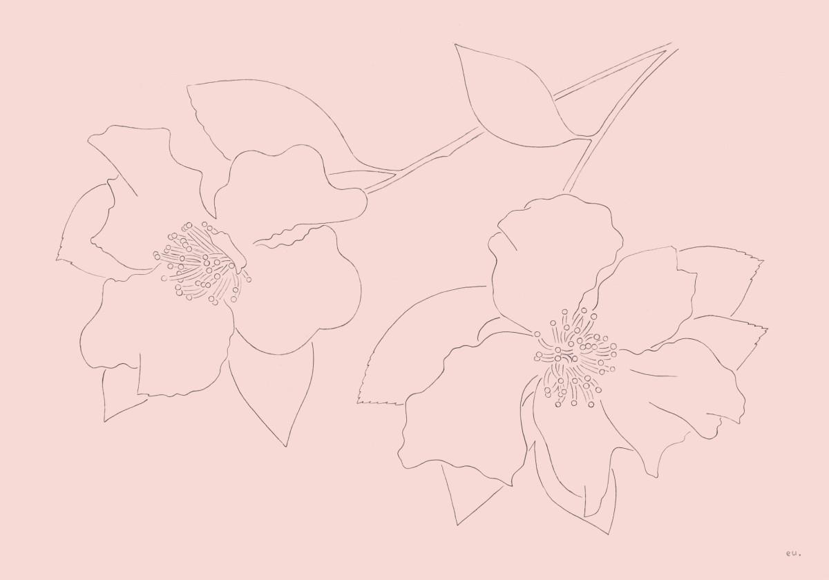 "Emi Ueoka / Personal Work / Botanical<span class=""slide_numbers""><span class=""slide_number"">1</span>/5</span>"