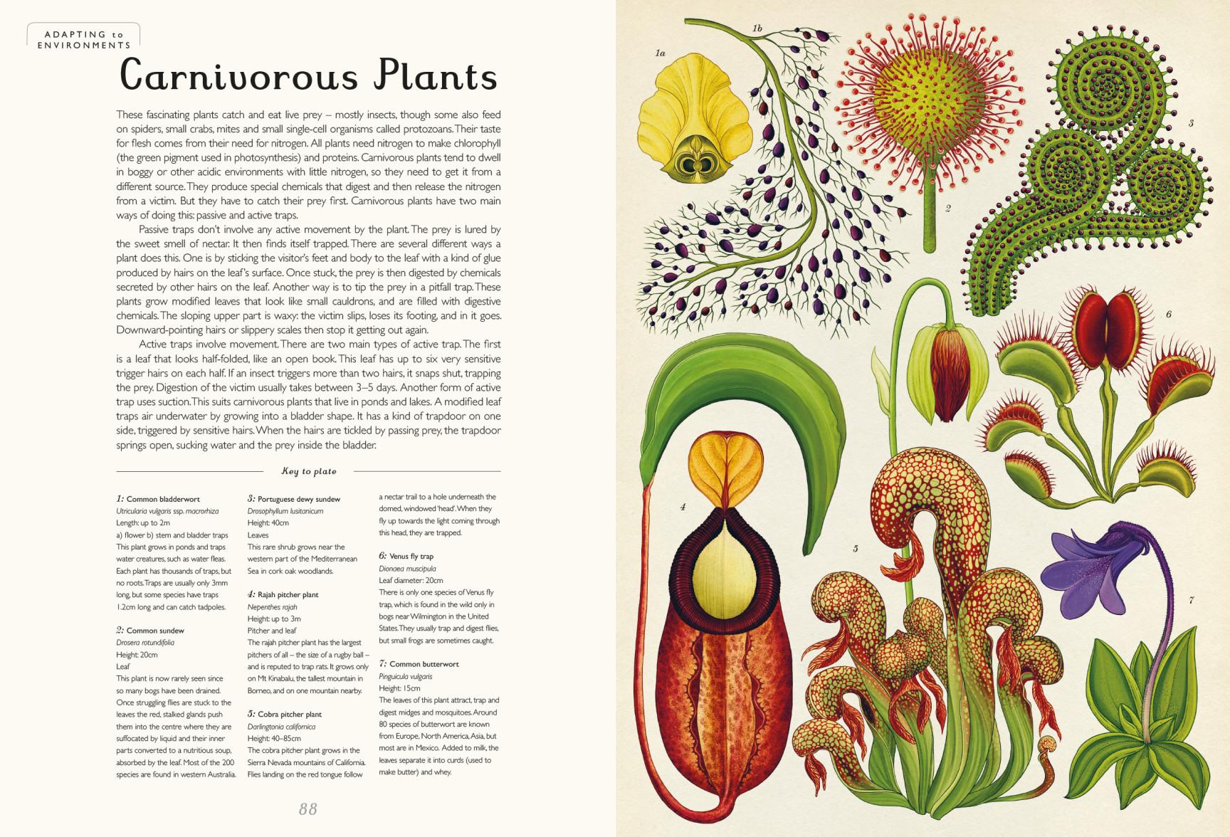 Botanicum - Big Active